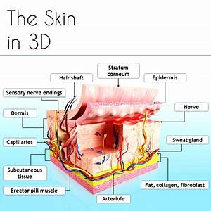 Human Body Systems – The skin in 3D | Detox & Body Cleanse