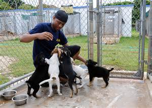 No Shed Dogs For Adoption by 5 Personal Benefits That Come With Volunteering At An