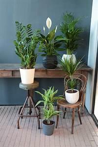 Zimmerpflanzen Für Kinderzimmer : bert pfe f r zimmerpflanzen obi ~ Orissabook.com Haus und Dekorationen