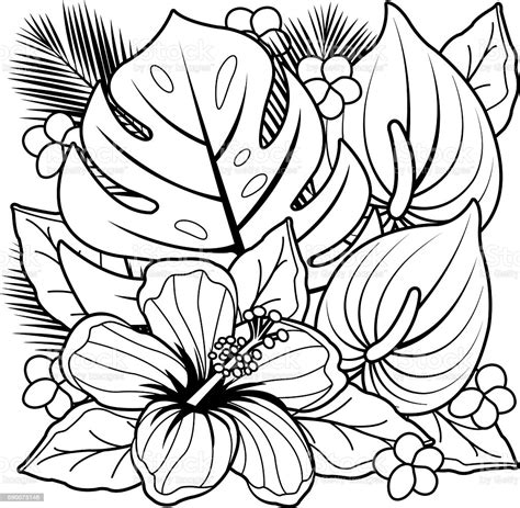 tropical plants  hibiscus flowers coloring book page stock illustration  image