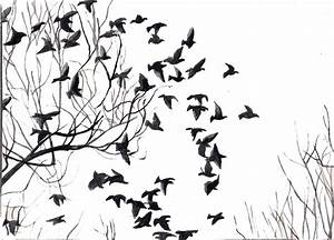 A Journey with Iqbal: Black & White Birds