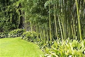 Bambus Pflanzen Kübel : bambus im garten tipps zur pflege der bambuspflanzen ~ Frokenaadalensverden.com Haus und Dekorationen