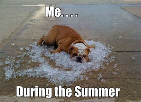 Hot Day Meme - during the summer funny memes we heart it summer dog and funny