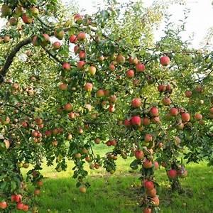 Quand Planter Un Pommier : quand tailler un arbre fruitier tailler un arbre fruitier ~ Dallasstarsshop.com Idées de Décoration