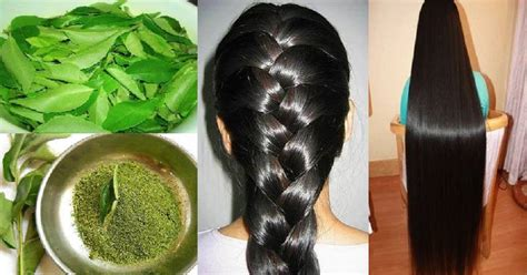 How To Use Curry Leaves To Get Long And Thick Hair Fast