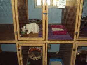 cat kennel kennels cattery pered pets doha