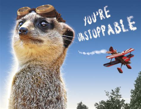 funny meerkat aviator encouragement card unstoppable