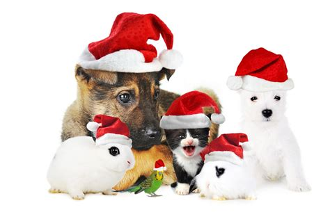 merry christmas pictures with animals natures mighty pictures nature photos nature wallpapers