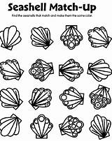 Seashell Coloring Pages Crayola Match Shells Sea Shell Printable Print Preschool Seashells Matching Sheets Adults sketch template