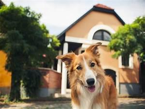 Vermieter Verbietet Hund : haustierhaltung hund katze maus in der mietwohnung ~ Lizthompson.info Haus und Dekorationen