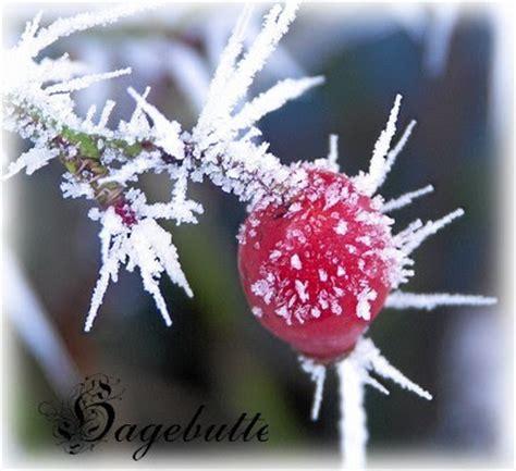 im winter blühende blumen bluemli garten winter blumen im schnee mit bildern