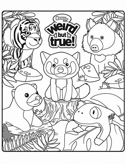 Coloring Weird Sheet Geographic National Happy Meal