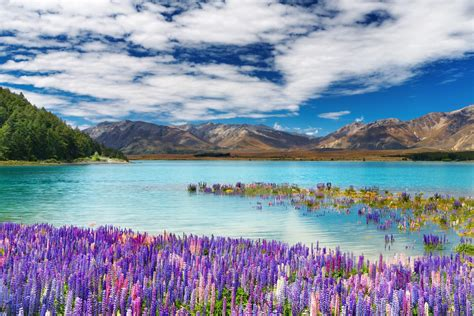 Lake Tekapo New Zealand Genome Bc