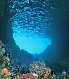 ripples of gratitude: Underwater forests