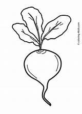 Vegetable Coloring Beet Clipart Beetroot Dibujos Printable Vegetables Colorear Clipartmag Remolachas Drawing Burak Fruits Frutas Czerwony Remolacha Verduras Tecido Fruit sketch template