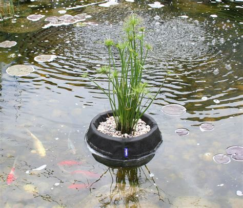 water garden plants laguna floating plant basket small 25 cm 10 quot from