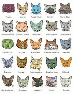 The Many Faces of Cat | Cat