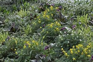 Pflanzen Im Schatten : landschaftsbaublumen und pflanzen fur standorte die im schatten liegen ~ Orissabook.com Haus und Dekorationen