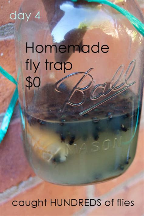 How To Trap House Flies by The Best Flytrap And It Probably Isn T The One