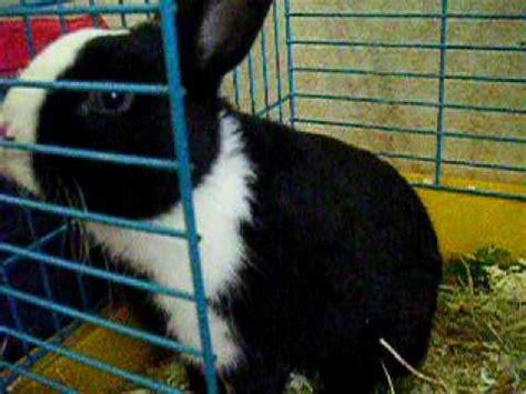 lapin noir et blanc