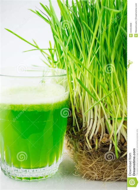 Green Organic Wheat Grass Juice Ready To Drink Royalty