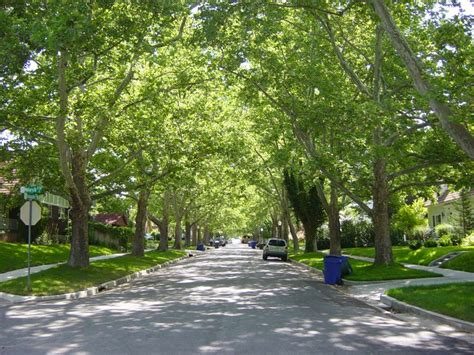 37 Best Images About Tree Lined Streets On Pinterest