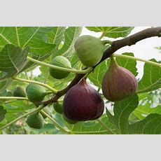 Survival Gardening  The Best Fruit Trees To Grow Indoors