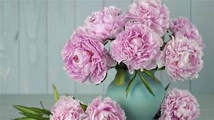 How Should My Resume Look Here S How To Grow Peonies That Last Forever Southern Living