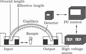 Schematic Diagram Of Capillary Electrophoresis Unit