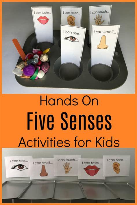 exploring   senses  preschool sorting activities