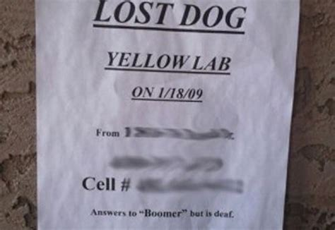 funny lost   flyers  worth