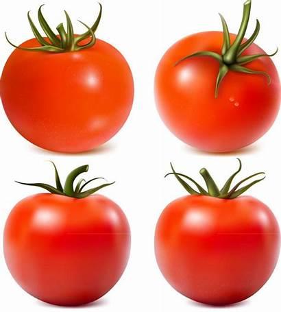 Vegetables Vector Tomato Tomatoes Vectors Clipart Fresh