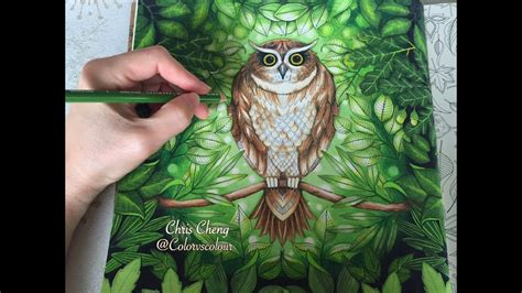 leaves drawing coloring  colored pencils secret