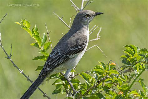 photographing birds in cuba with nikon 1 nikon rumors