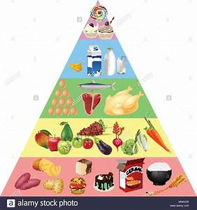 Food Pyramid Chart Stock Vector Art  U0026 Illustration  Vector