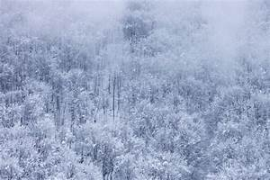 Free Picture  Fog  Snowflake  Mist  Snowy  Forest  Winter