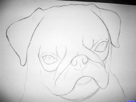draw  realistic pug step  pets animals
