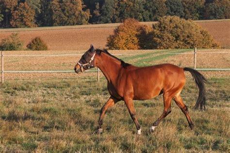 animals  start   horse jessica paster