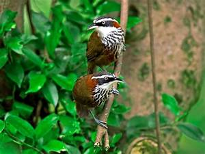 THATTEKAD BIRD SANCTUARY Photos, Images and Wallpapers ...