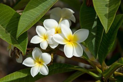 nomi di fiori 17 nomi per bambine ispirati ai fiori nostrofiglio it