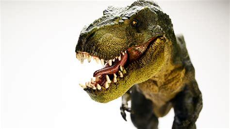 Hd Photography Wallpapers Best Photography Wallpapers Wallpaper Dinosaur Tyrannosaurus T Rex 5k Animals 848