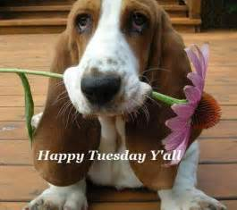 Happy Tuesday Funny Puppies