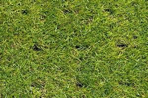 Rasen Vertikutieren Lüften : rasen l ften vorteile vorgehen beim rasenl ften plantura ~ Markanthonyermac.com Haus und Dekorationen