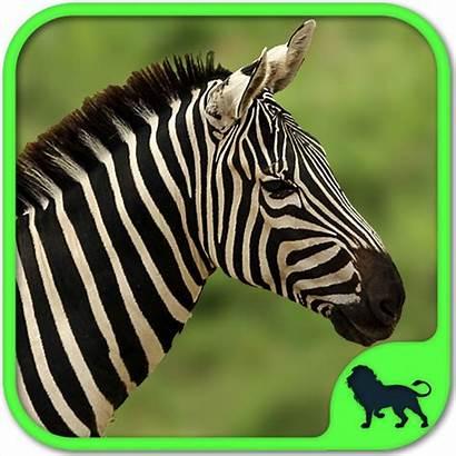Zoo Animals Puzzle Animal Wild Puzzles Games
