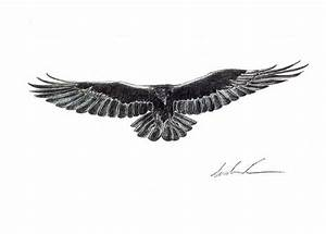 flying crow front view - Google Search | Raven, Crow ...