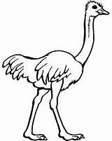 Ostrich Coloring Preschool Drawing Printable Animals Animal Kindergarten Sheets Zoo Ostriches Colouring Clipart Cartoon Emu Bird African Preschoolcrafts Children Drawings sketch template