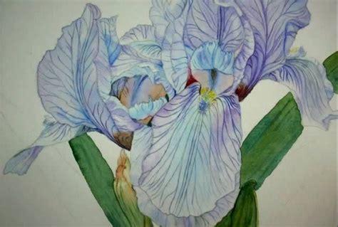 disegnare dipingere gli iris consigli  tanti tutorial