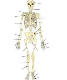 Skeleton Bones Diagrams with Labels