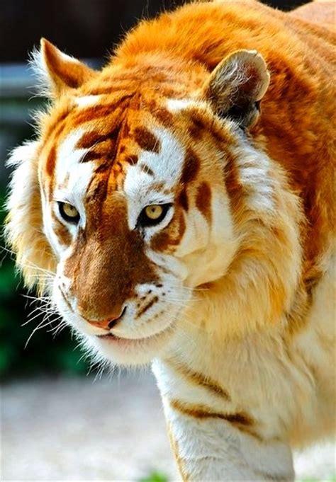 Best Extinct Almost Animals Images Pinterest