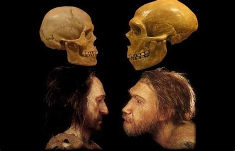 How Did Early Homo Sapiens Differ From Neanderthals? Quora